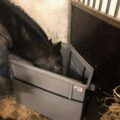The Natural and Healthy Slow Hay Feeder for Horses